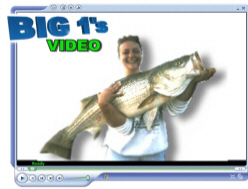 Beaver Lake Striper Fishing Video